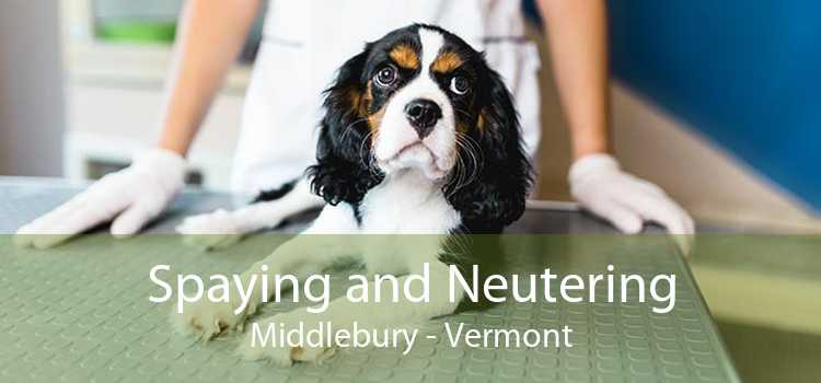 Spaying and Neutering Middlebury - Vermont