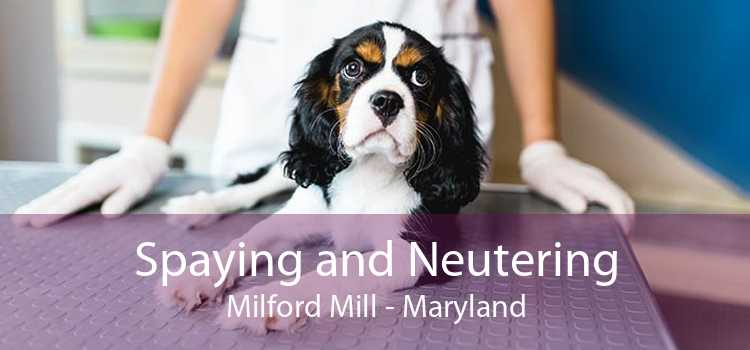 Spaying and Neutering Milford Mill - Maryland