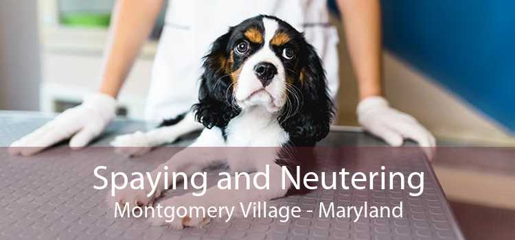 Spaying and Neutering Montgomery Village - Maryland
