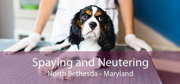 Spaying and Neutering North Bethesda - Maryland