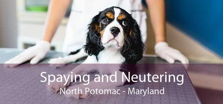 Spaying and Neutering North Potomac - Maryland