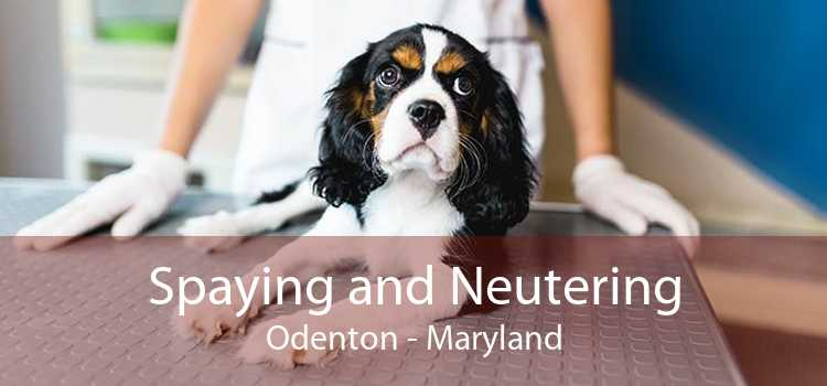 Spaying and Neutering Odenton - Maryland