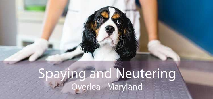 Spaying and Neutering Overlea - Maryland
