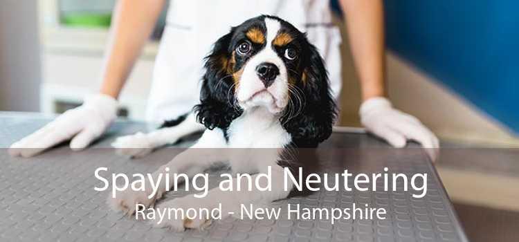 Spaying and Neutering Raymond - New Hampshire