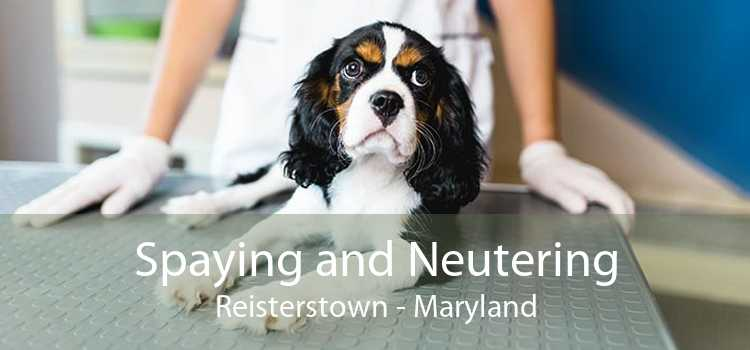 Spaying and Neutering Reisterstown - Maryland