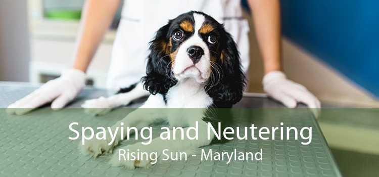 Spaying and Neutering Rising Sun - Maryland