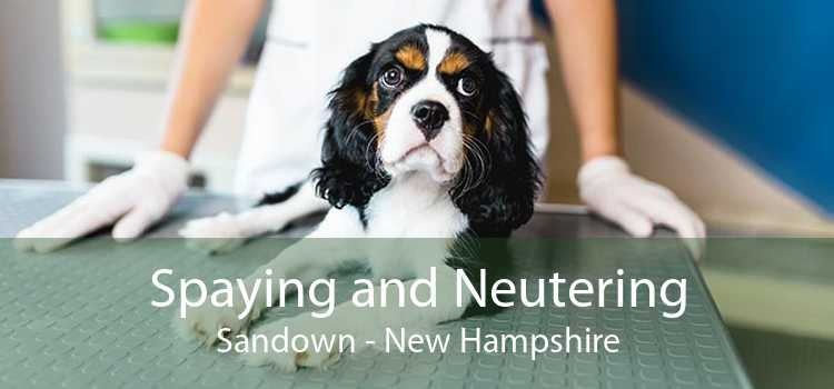 Spaying and Neutering Sandown - New Hampshire