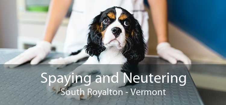 Spaying and Neutering South Royalton - Vermont
