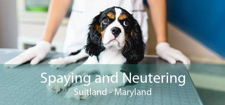 Spaying and Neutering Suitland - Maryland