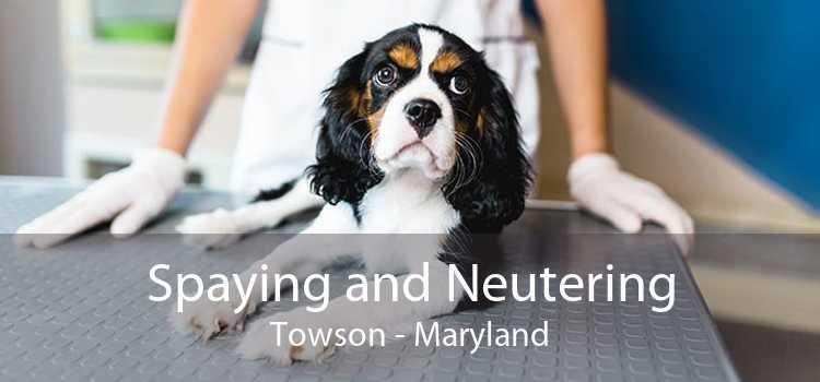 Spaying and Neutering Towson - Maryland