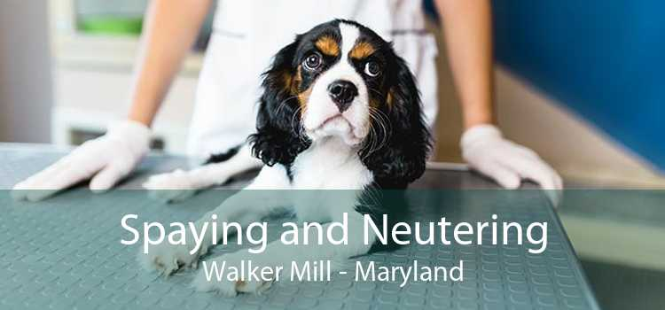 Spaying and Neutering Walker Mill - Maryland