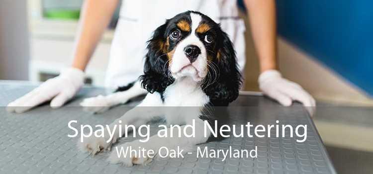 Spaying and Neutering White Oak - Maryland