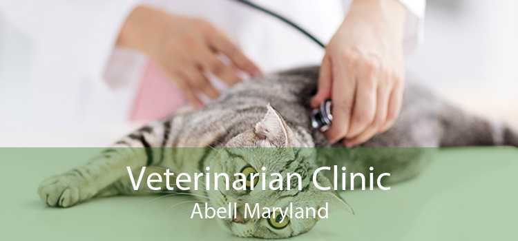 Veterinarian Clinic Abell Maryland