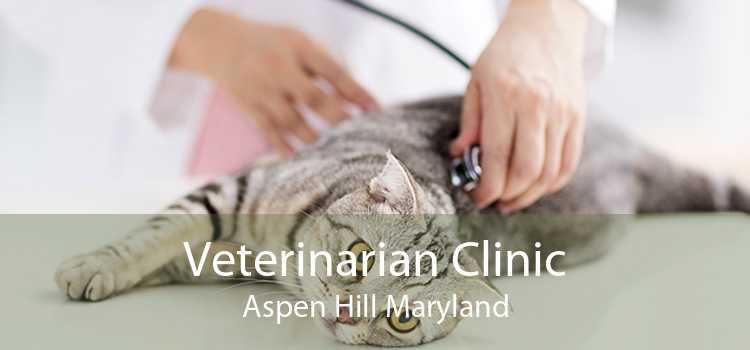 Veterinarian Clinic Aspen Hill Maryland
