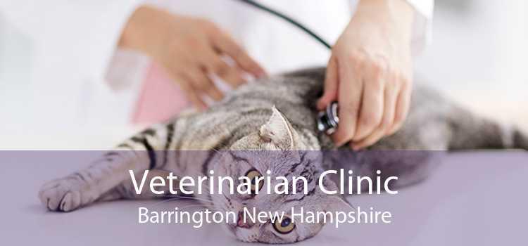 Veterinarian Clinic Barrington New Hampshire