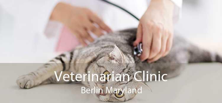 Veterinarian Clinic Berlin Maryland