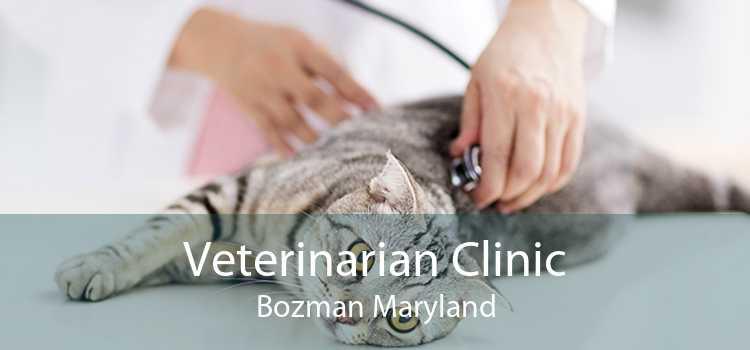 Veterinarian Clinic Bozman Maryland