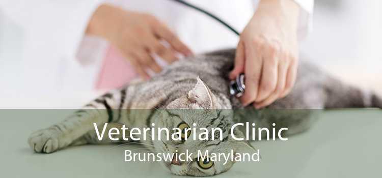 Veterinarian Clinic Brunswick Maryland