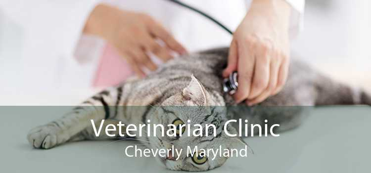 Veterinarian Clinic Cheverly Maryland