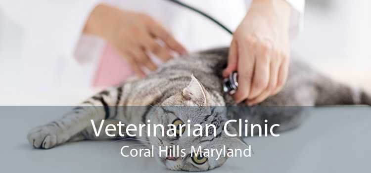 Veterinarian Clinic Coral Hills Maryland