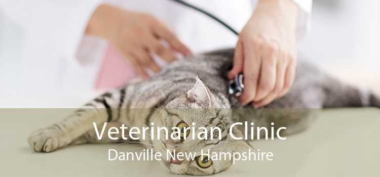 Veterinarian Clinic Danville New Hampshire