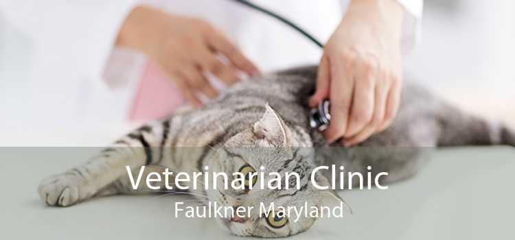 Veterinarian Clinic Faulkner Maryland