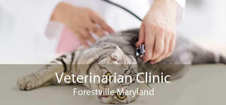 Veterinarian Clinic Forestville Maryland