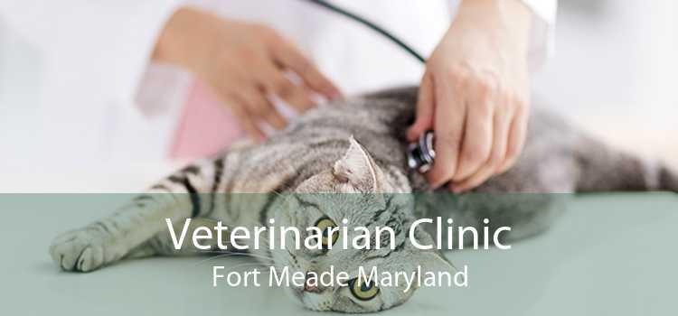 Veterinarian Clinic Fort Meade Maryland