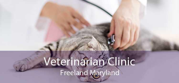 Veterinarian Clinic Freeland Maryland