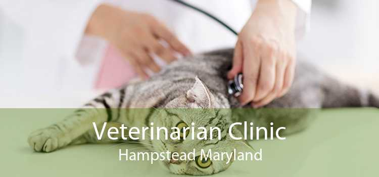 Veterinarian Clinic Hampstead Maryland