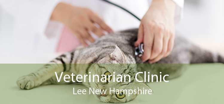 Veterinarian Clinic Lee New Hampshire