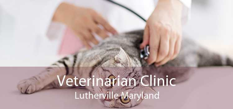 Veterinarian Clinic Lutherville Maryland