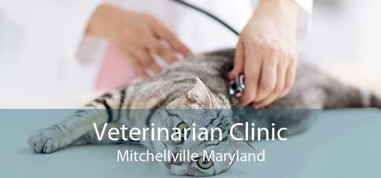 Veterinarian Clinic Mitchellville Maryland