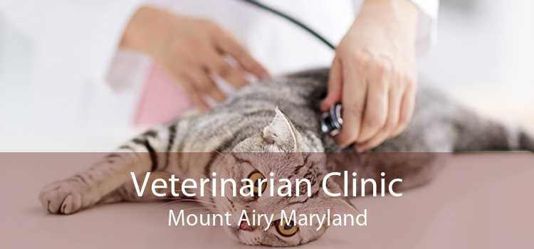 Veterinarian Clinic Mount Airy Maryland