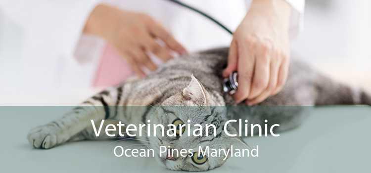 Veterinarian Clinic Ocean Pines Maryland