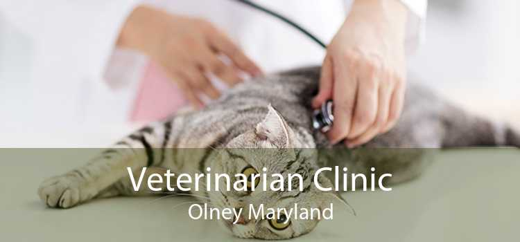 Veterinarian Clinic Olney Maryland