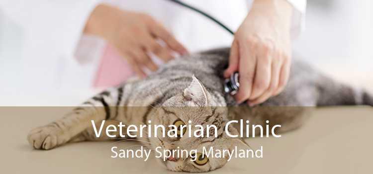 Veterinarian Clinic Sandy Spring Maryland