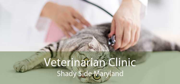 Veterinarian Clinic Shady Side Maryland