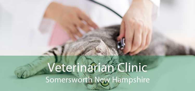 Veterinarian Clinic Somersworth New Hampshire