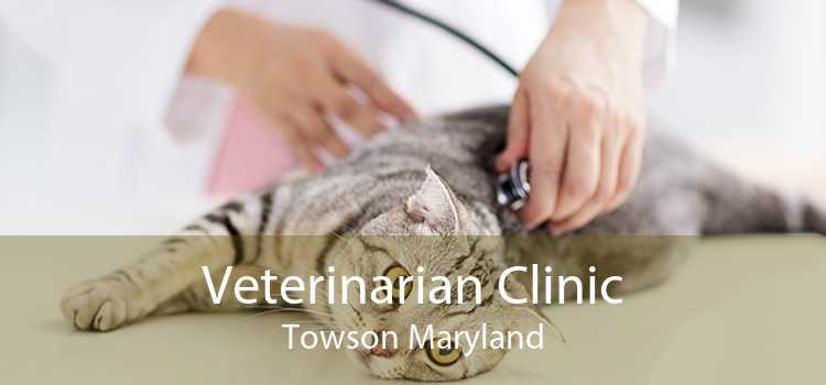 Veterinarian Clinic Towson Maryland
