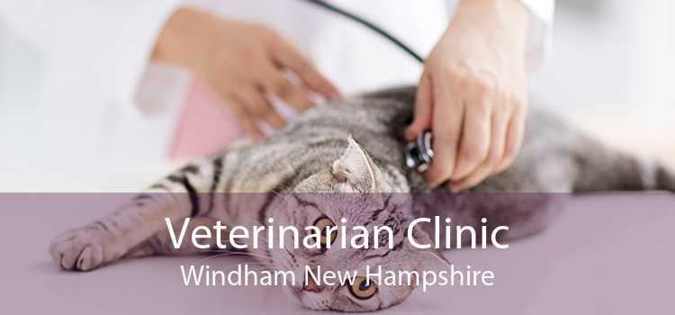 Veterinarian Clinic Windham New Hampshire